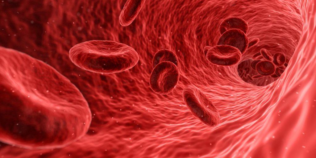 Das Blut gibt Aufschluss über verschiedene Erkrankungen.