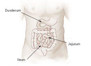 Verdaungs-Organe Anatomische Zeichnung