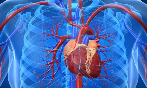 Herzrhythmusstörungen: Wann werden sie gefährlich?