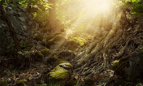 Waldboden Sonnenstrahlen