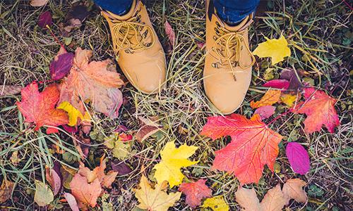 Herbst Blätter liegen auf dem Boden oben