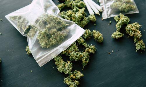 Marihuana – Medizin oder Droge