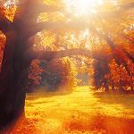 Vitamin D und Lichttherapie gegen den Herbstblues