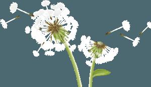 Pollen und Gräser