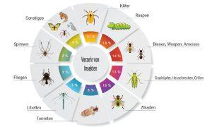 Welche Insekten sind die beliebtesten?