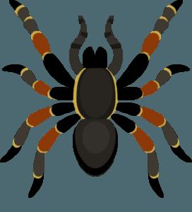 Panik und Phobien