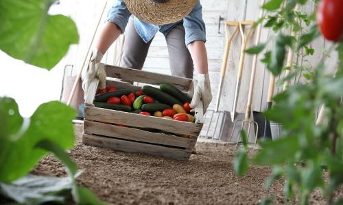 Das Bio Siegel für Bio Lebensmittel als Indikator für gesundes Essen