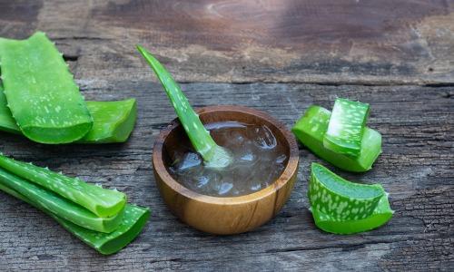 Aloe Vera Blätter, Schale mit Aloe Vera Gel auf Holztisch