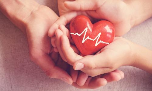 Kleines rotes Herz mit Kardiogramm wird von Händen übergeben. Symbol für Organspende.