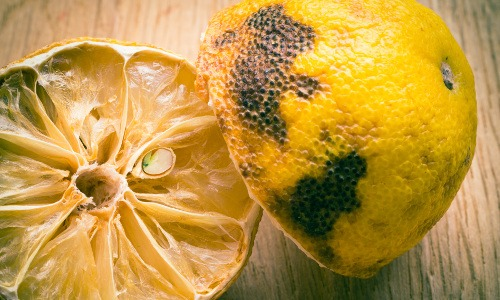 Zitrone mit Schimmel auf Holzplatte