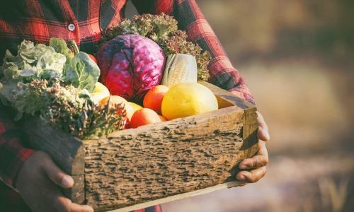 Gesund essen durch Saisonalität und Regionalität
