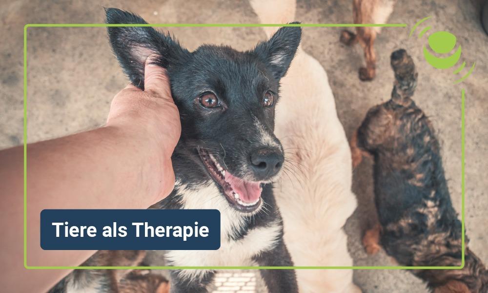 Tiertherapie oder tiergestützte Therapie