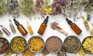 Health Rise Heilpflanzen