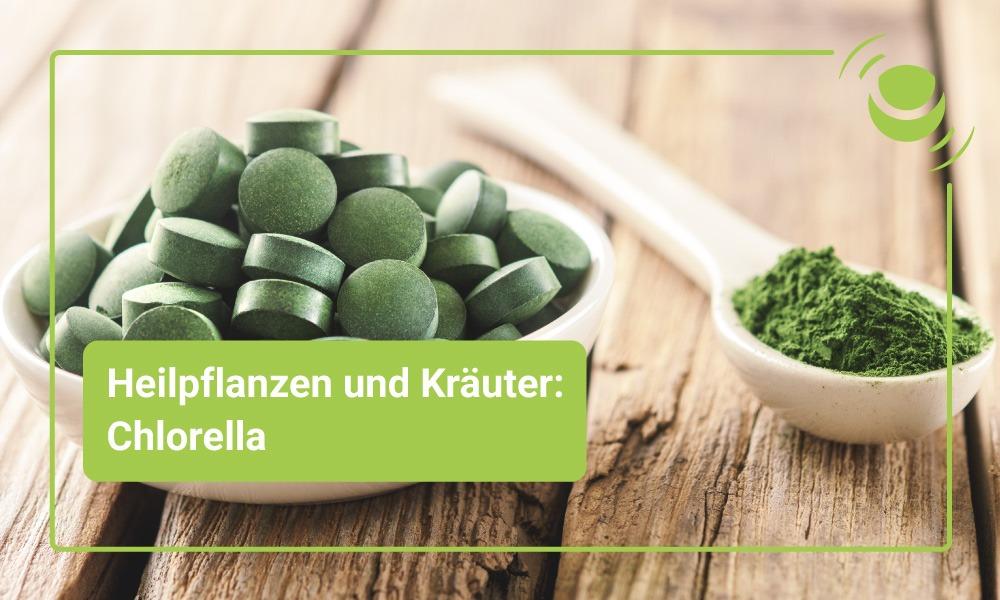 Chlorella – mögliche Anwendungsgebiete und Wirkungsweisen