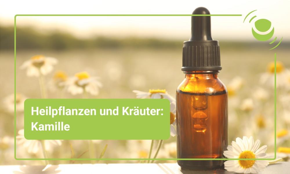 Kamille – mögliche Anwendungsgebiete und Wirkungsweisen