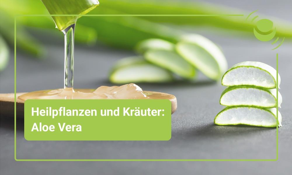 Aloe-Vera Heilpflanze