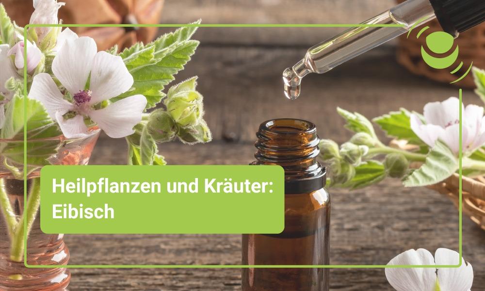 Heilpflanze Eibisch