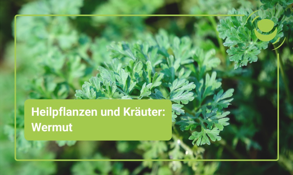 Wermut Heilpflanze