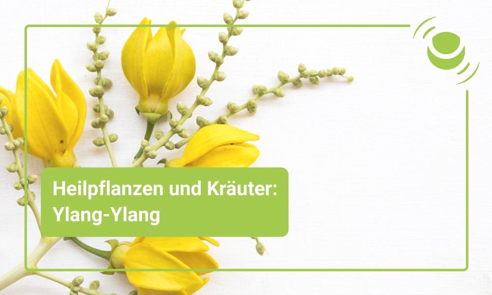 Ylang-Ylang Heilpflanze