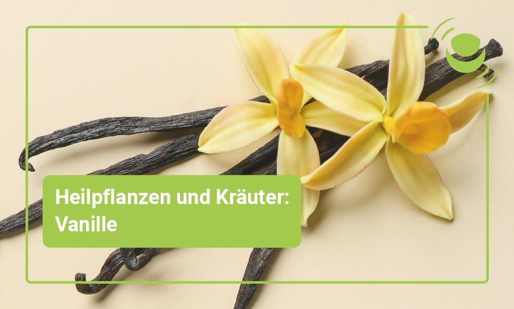 Vanille Heilpflanze